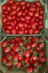 Supplies of Tomatoes Red Plum-Shaped