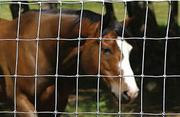 Cattle Fence for Breeding Cattle,  Deer,  Horse,  Sheep
