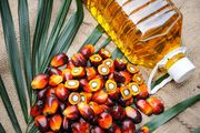 Palm oil and palm seeds for sale